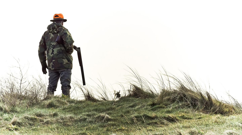 Hunter in Brittany, France │© ludovic