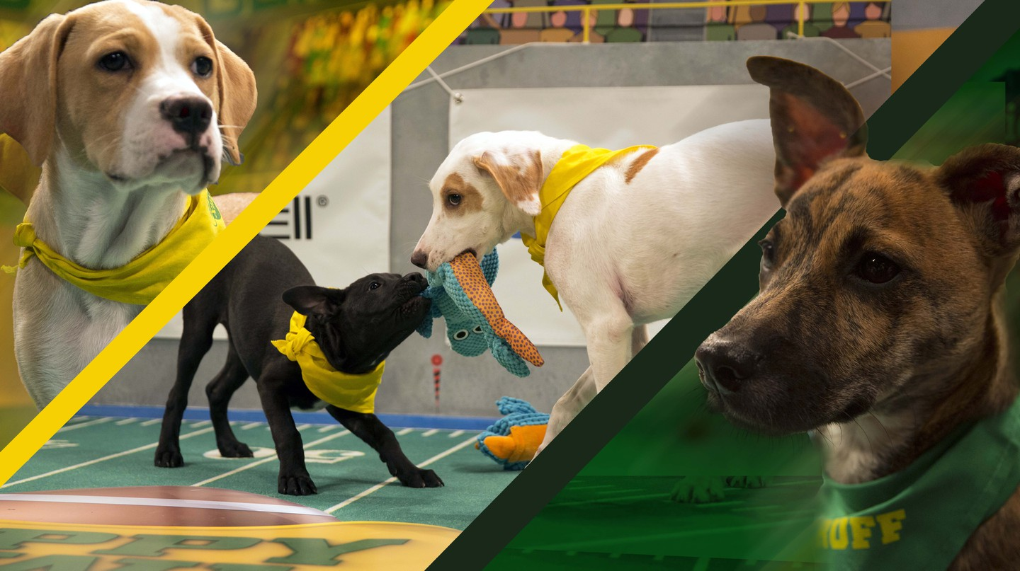 Puppy Bowl XIII takes place Feb. 5 | © Discovery Communications