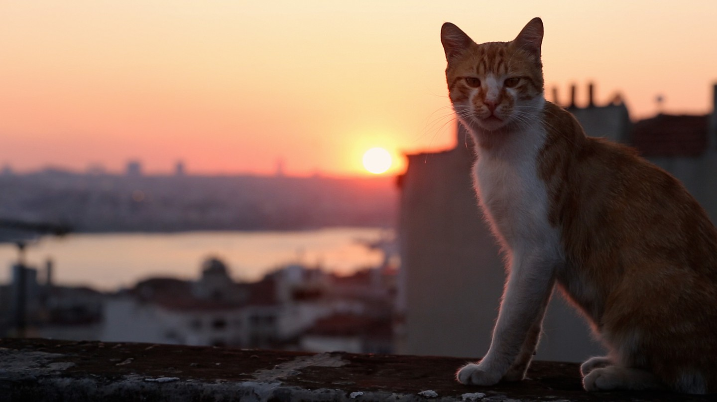 Why The Movie 'Kedi' Is Cool For Cats And Humans, Too