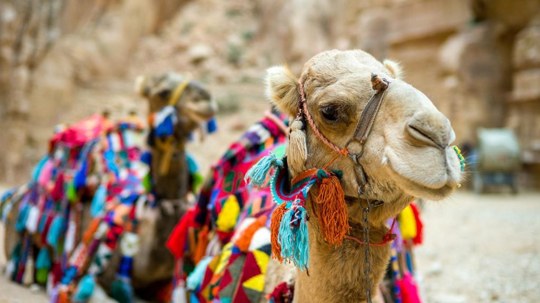 Camel in front of the Treasury, Petra, Jordan © Colin Tsoi / Flickr