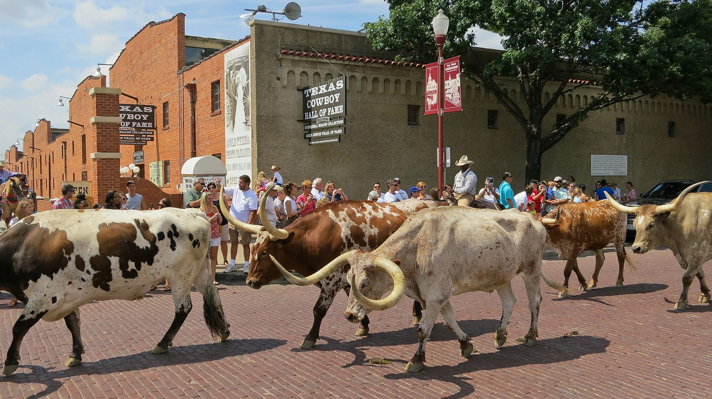 Longhorn cattle drive at Fort Worth Stockyards | © Alex Butterfield / Flickr