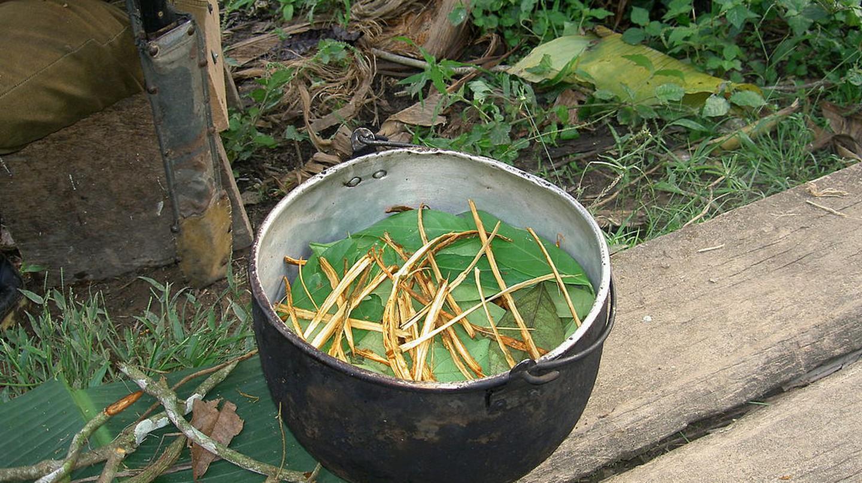 Ayahuasca tea © Terpsichore/WikiCommons