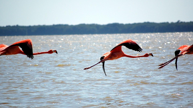 Celestún's famous flamingos | © Mindaugas Danys/Flickr