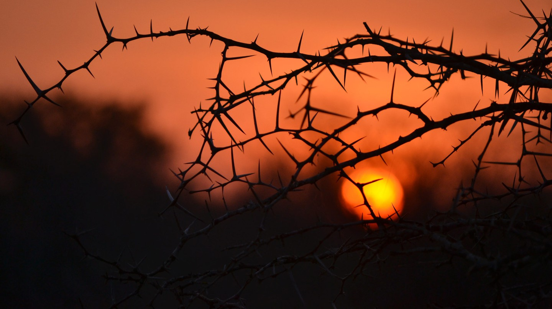 A typical African sunset   © René De Klerk