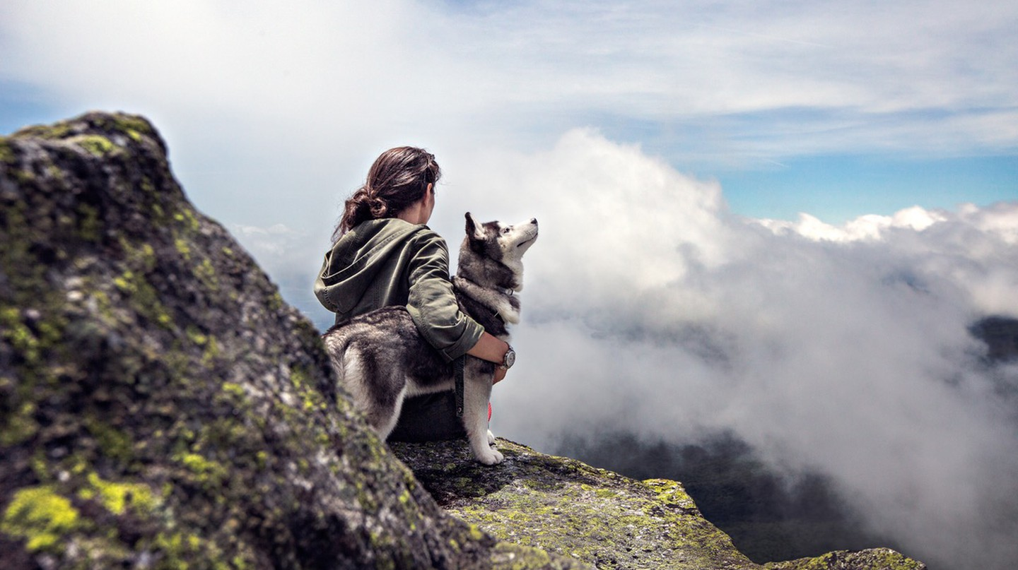 Hiking with a husky | © Pexels
