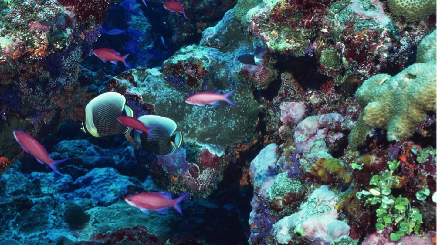 Marine life thrives in the Andros Coral Reef | Pixabay