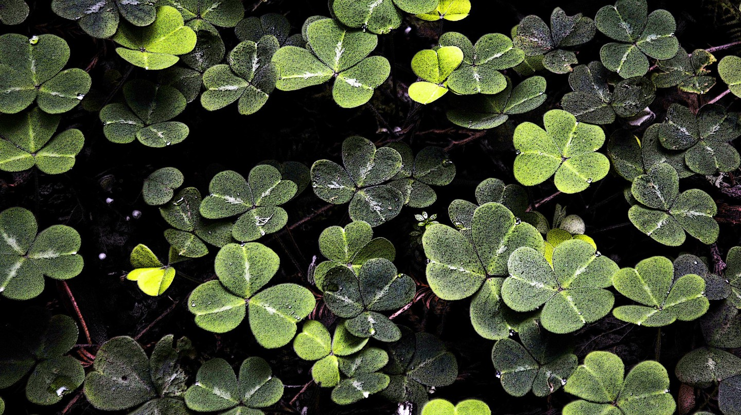 Shamrock | © Public Domain Pictures