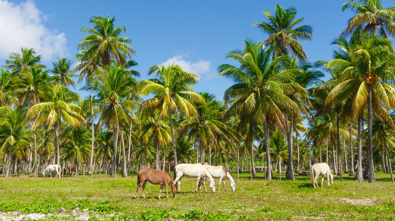 Horses at the Morro de Sao paulo Beach in Salvador, Brazil | © rodrigobark/Shutterstock