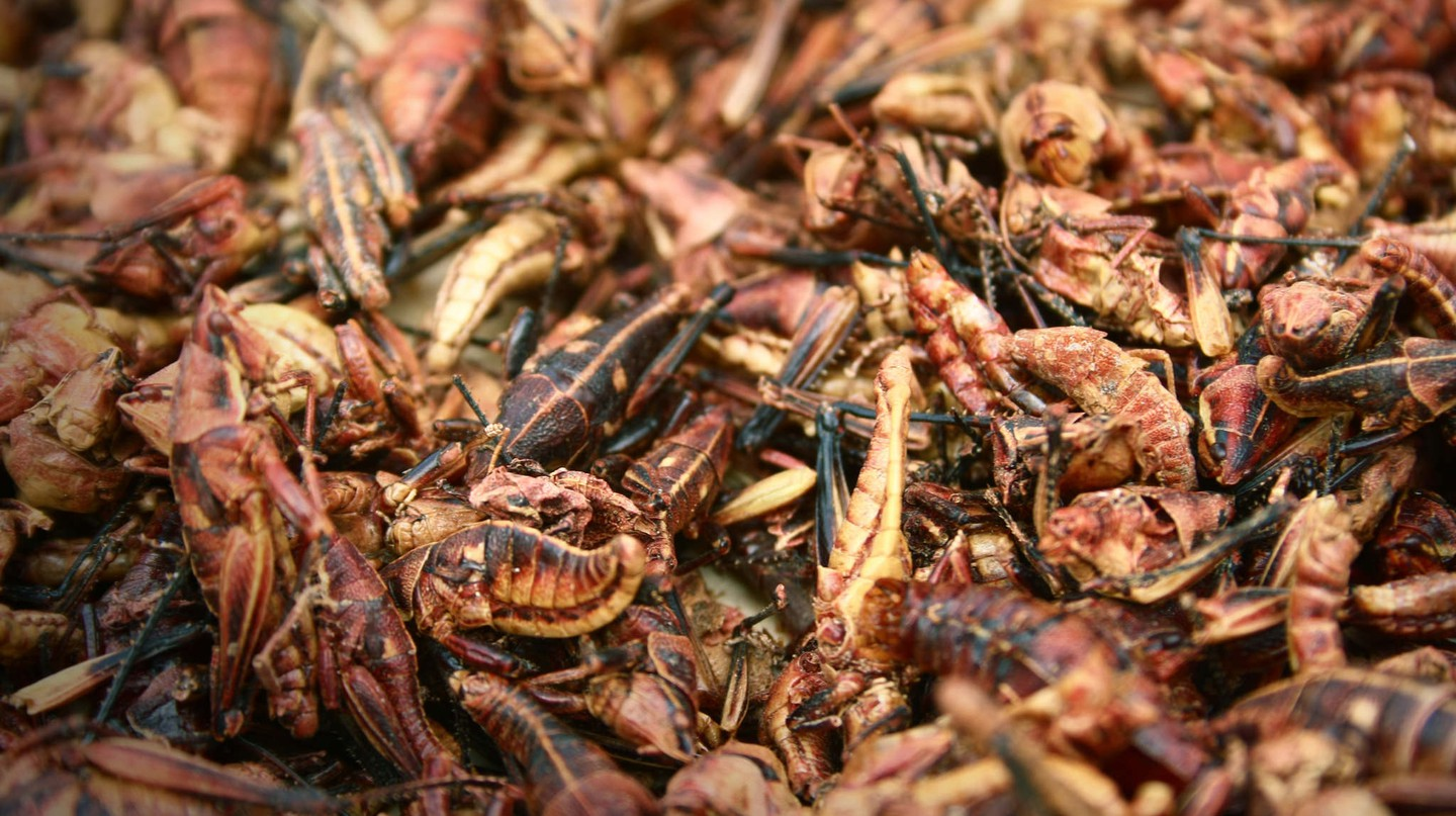Grasshoppers are a popular food item in Mexico and Central America | © Flickr/Verino77