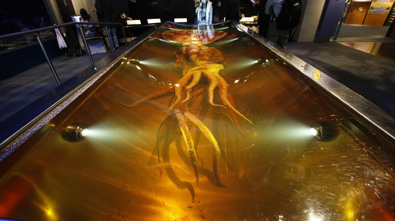 Colossal Squid Exhibit, Te Papa Museum | © Al404/Flickr