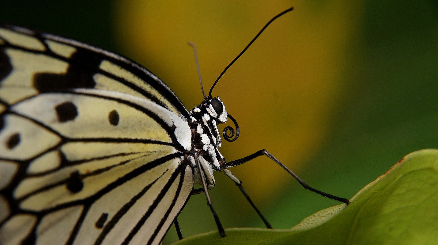 The KL Butterfly Park | © Bernard Spragg. NZ