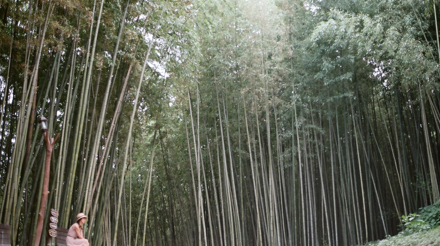 Damyang bamboo forest | © Th. Lee / Flickr