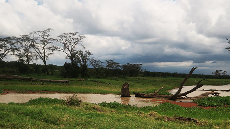 Safari Featured image | © Jean Wandimi