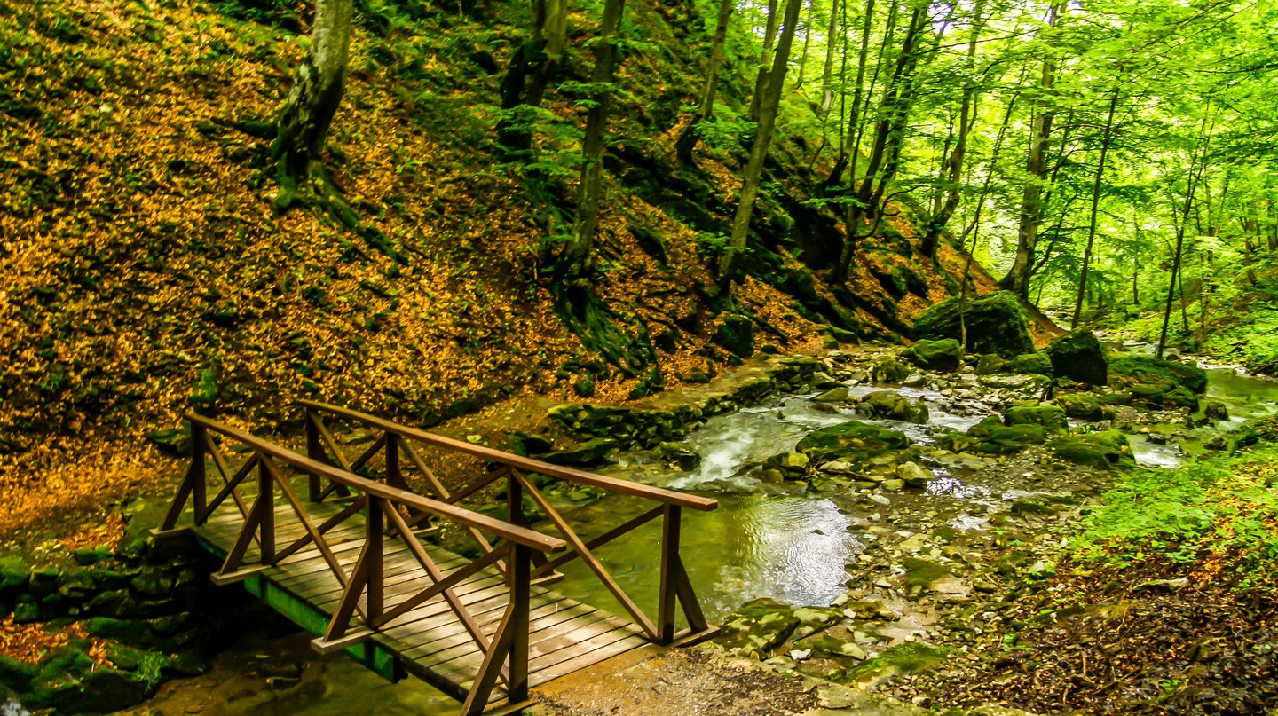 Forest in Bulgaria   © Pixabay