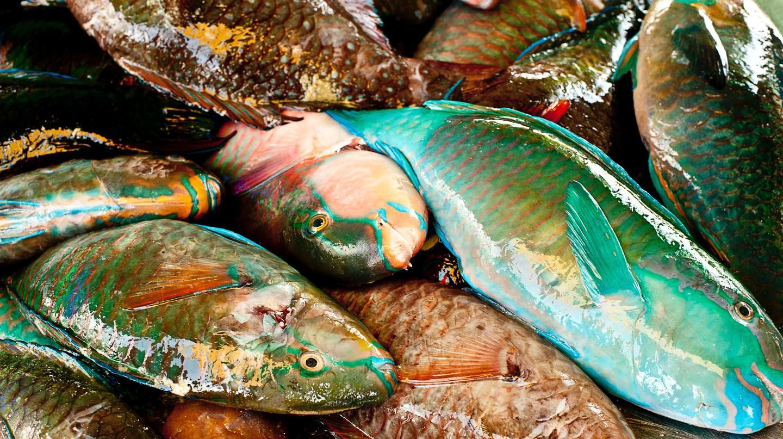 Seafood is popular in Finland/ Paul Morris/ Unsplash