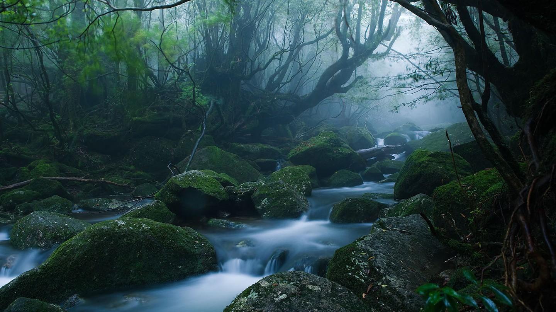 Mononoke forest, Yakushima island | © Casey Yee / Flickr