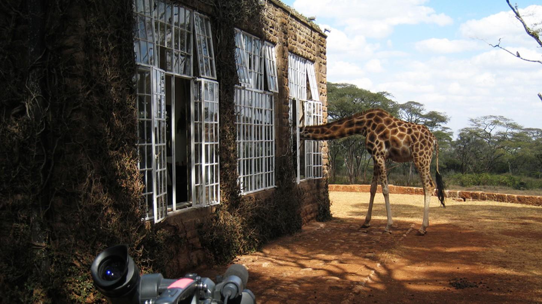 Giraffe Manor | ©Jake/ Flickr