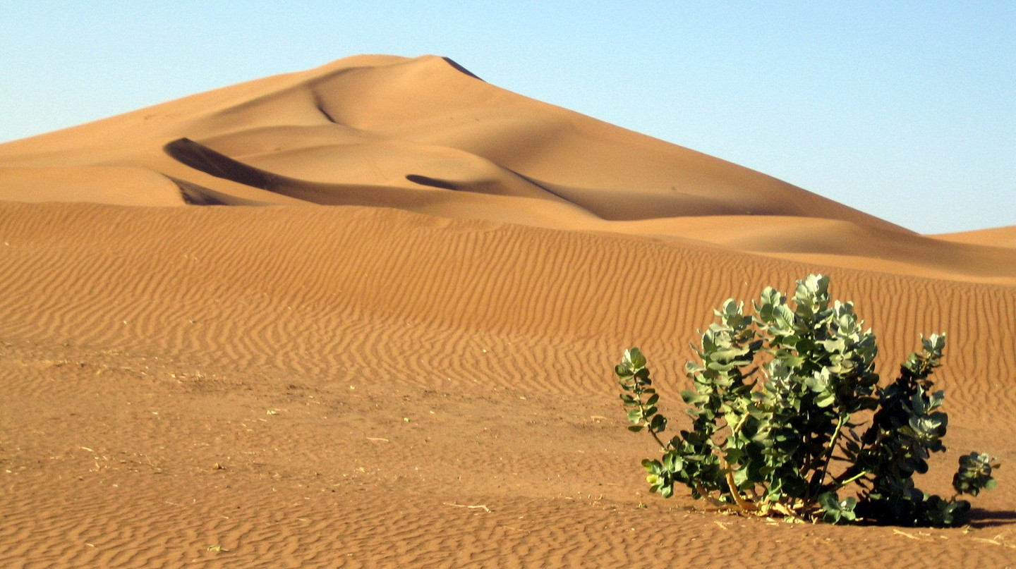 Lone plant in the arid Moroccan desert |© Carlos ZGZ /  Flickr