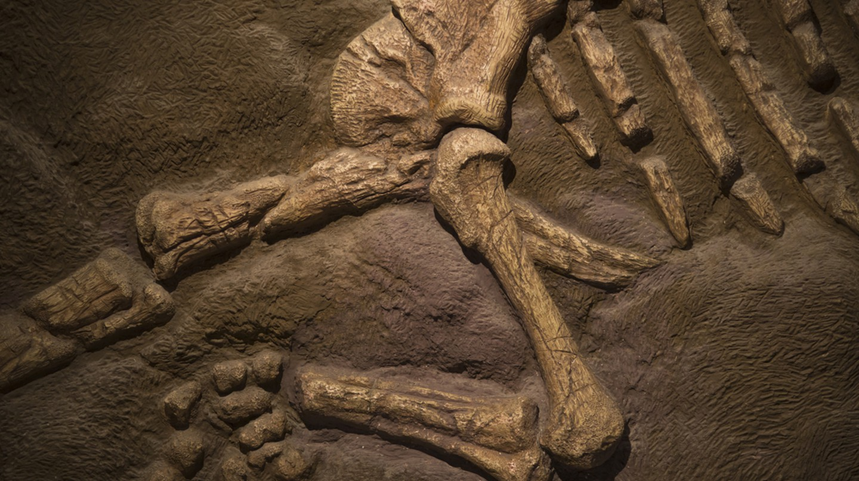 Dinosaur fossil | © Orenzy Photography / Shutterstock