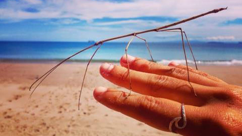 Stick insect | © Jenn Parker