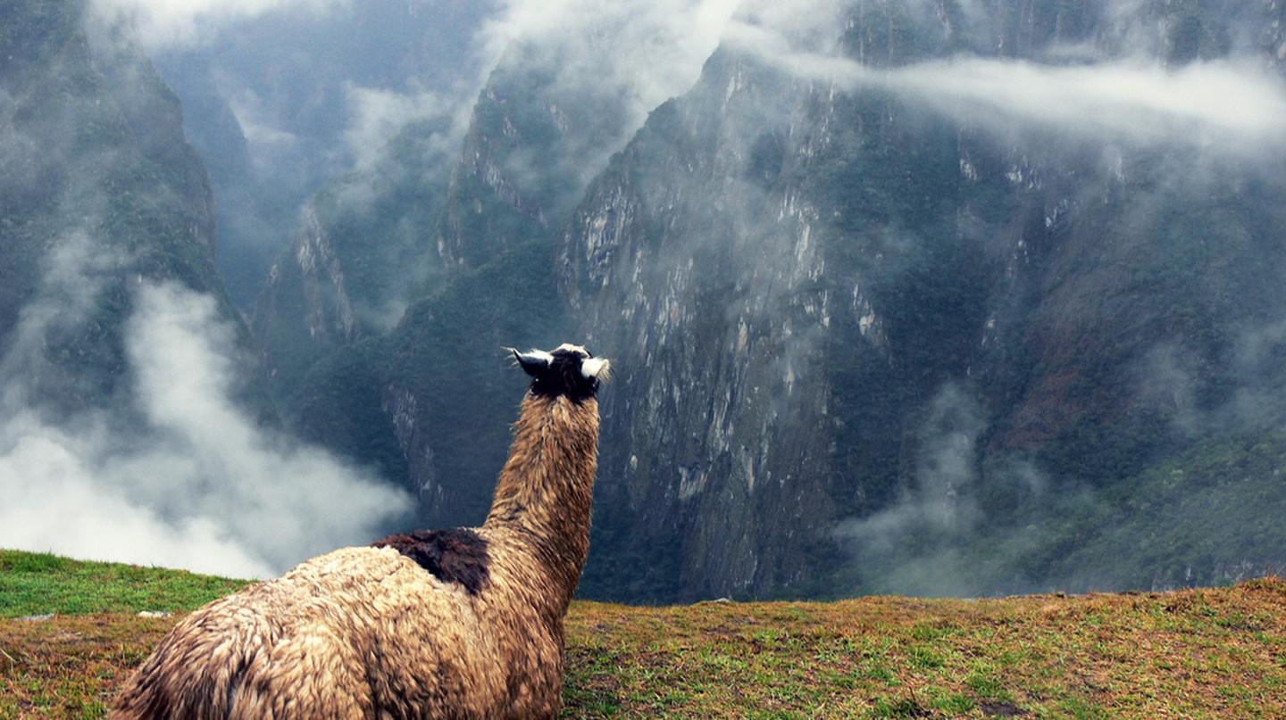 A llama looking out from Machu Picchu | © Roger Nelson/Flickr