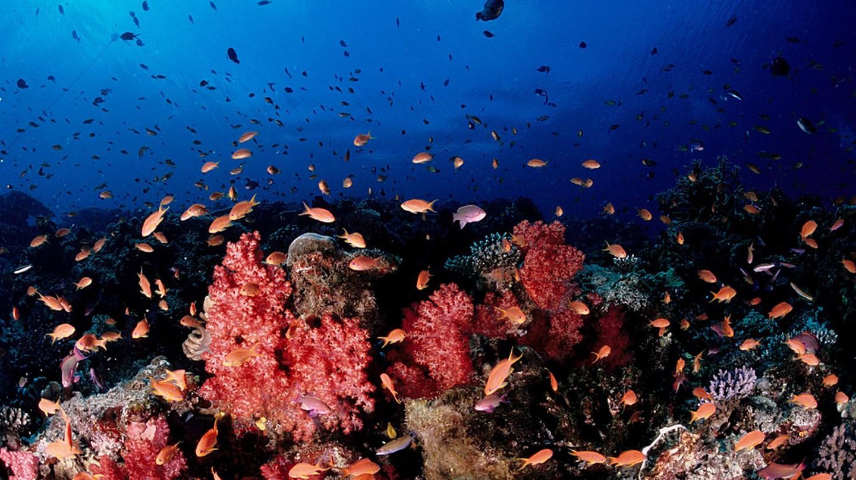 Soft coral, Fiji | ©Tony Shih / Flickr