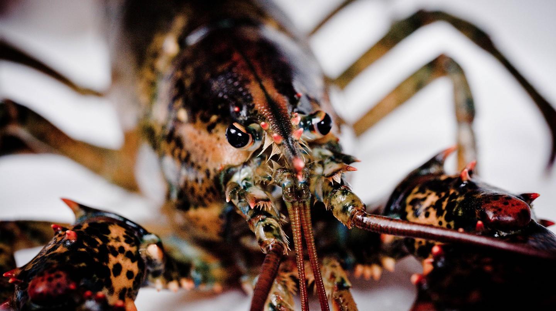 Lobster | © Tatiana Vdb / Flickr