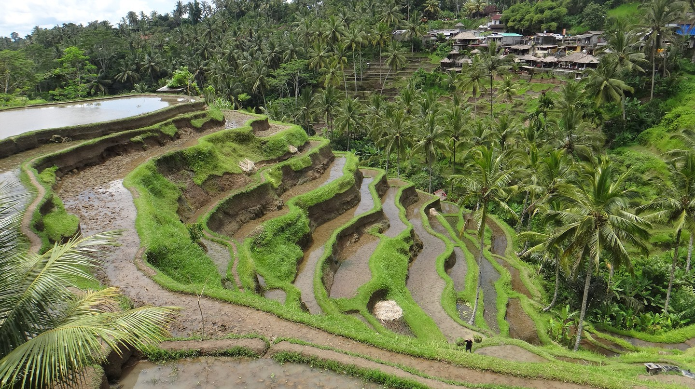 Tegalalang Rice Terraces | © Björn Bröskamp
