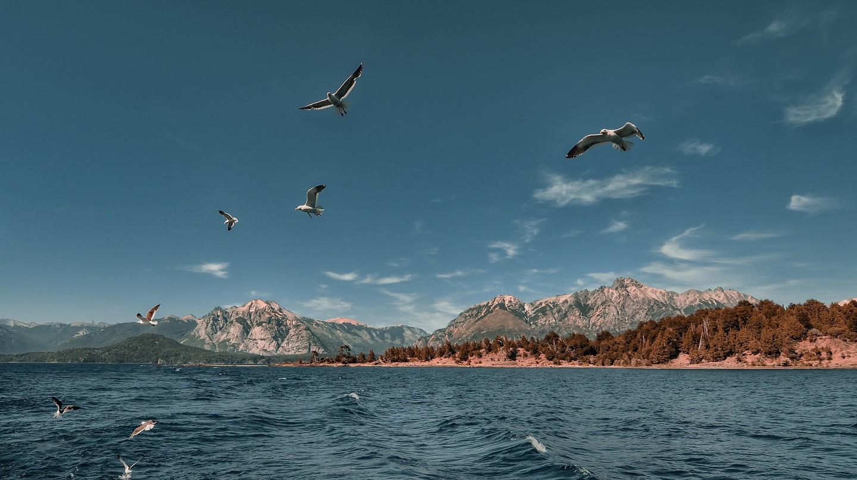 Birds in flight over Lake Nahuel Huapi | © Emilio Küffer/Flickr