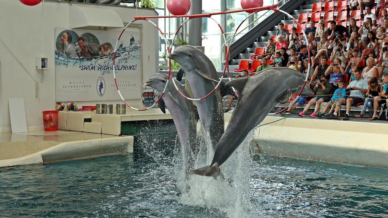 Dolphinarium in Varna | © pompi/Pixabay