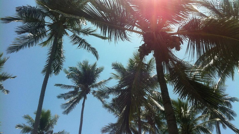 palm trees  | © Courtesy of andre16/Pixabay