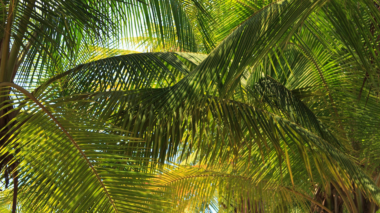 Shade palm on a sunny day | © Wayne Silver