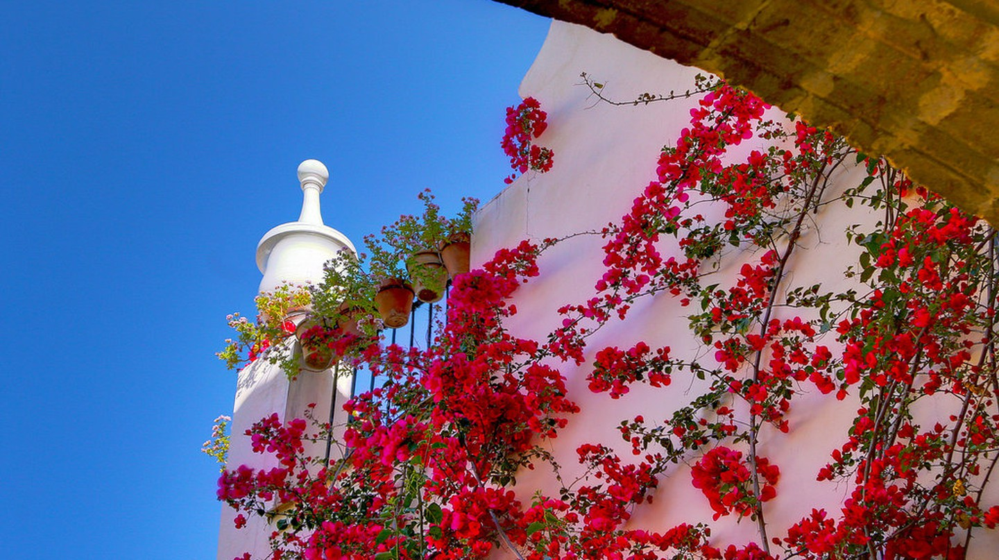 The famous flowers of Córdoba | Wolfgang Manousek/Flickr