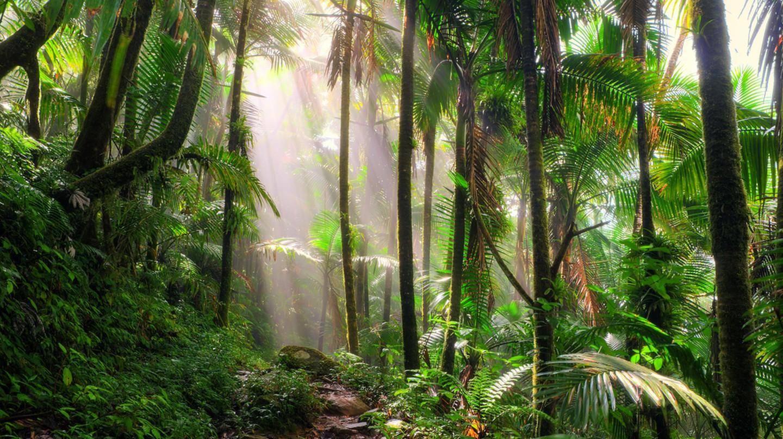 El Yunque national forest, Puerto Rico | © Dennis van de Water/Shutterstock