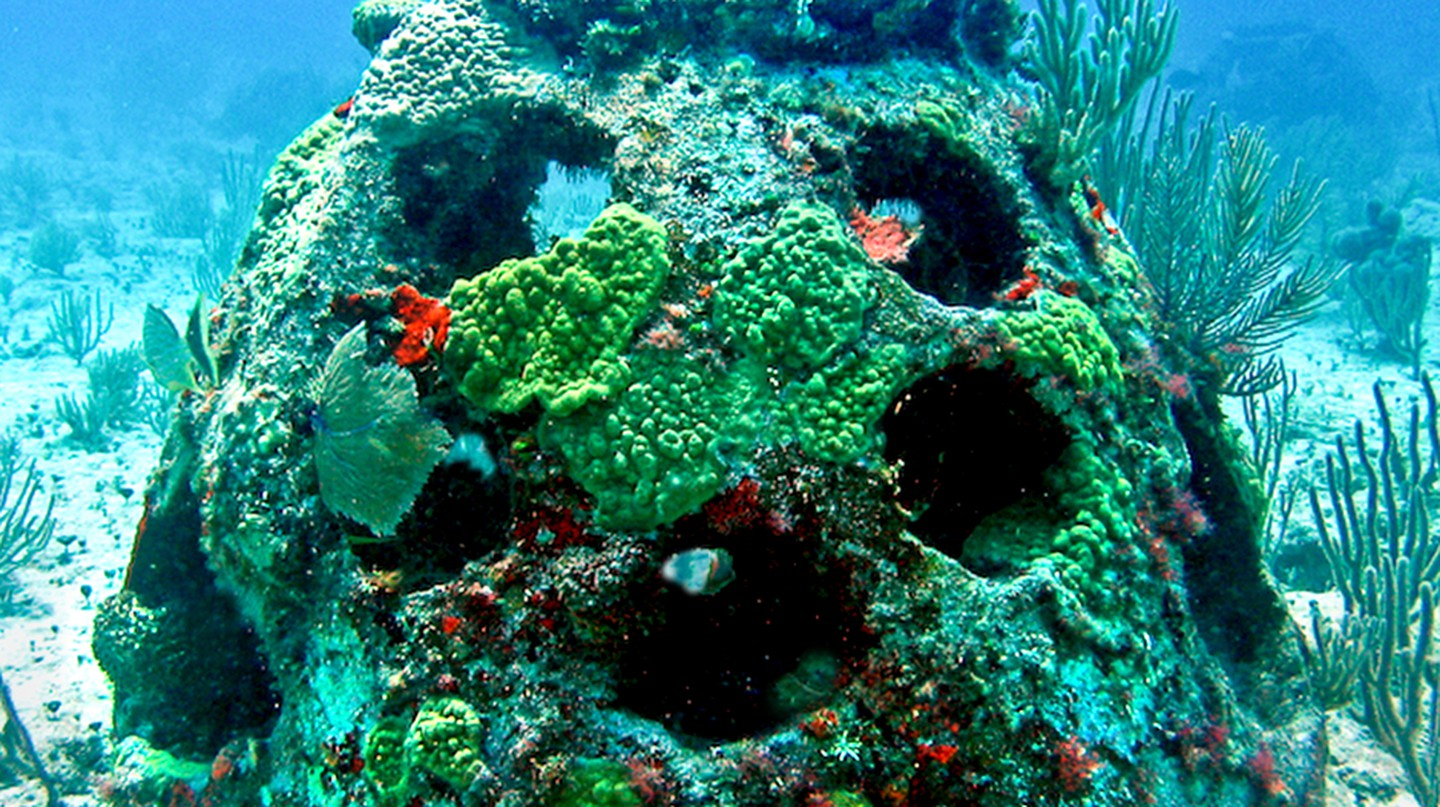 Mature growth living-legacy | Courtesy of  EternalReefs.com
