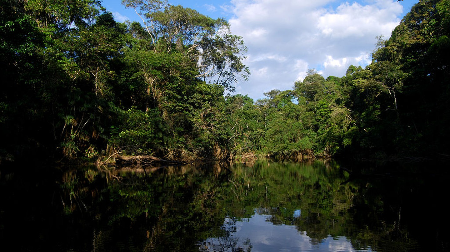 Oxbow Lake, Yasuni | © Geoff Gallice / Flickr