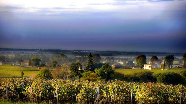 Vineyard, Bordeaux | © Blaye Côtes de Bordeaux/Flickr