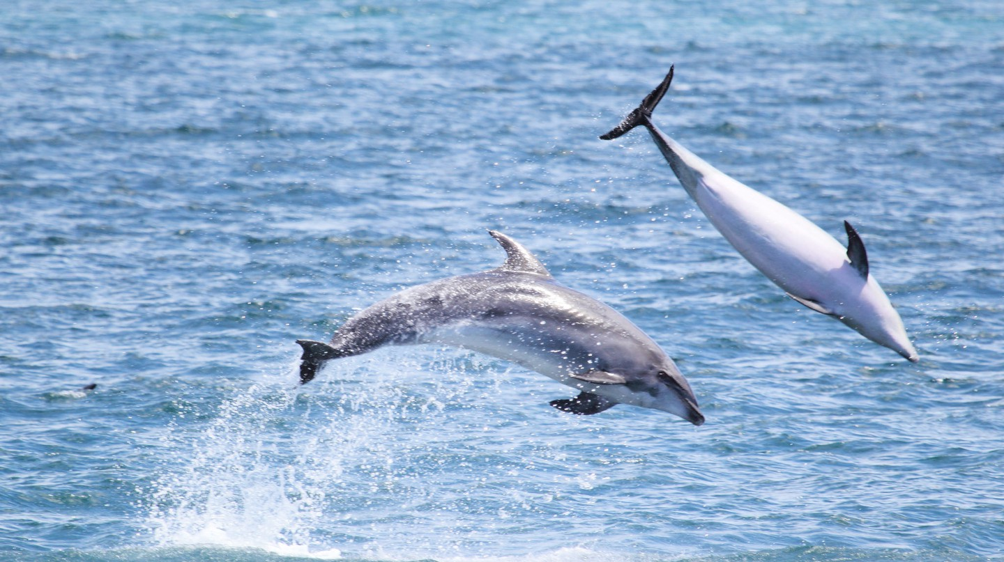 Dolphins in the Bay of Islands, New Zealand | © j.e.mcgowan/Flickr