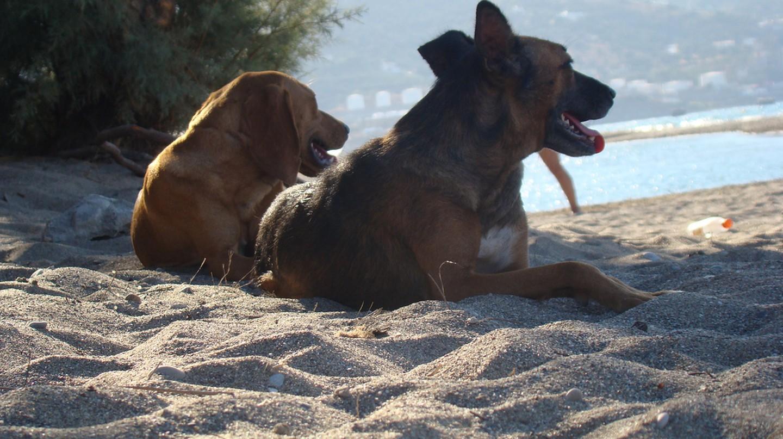 Resting at the beach   © Γιώργος σιγά μην πω/flickr
