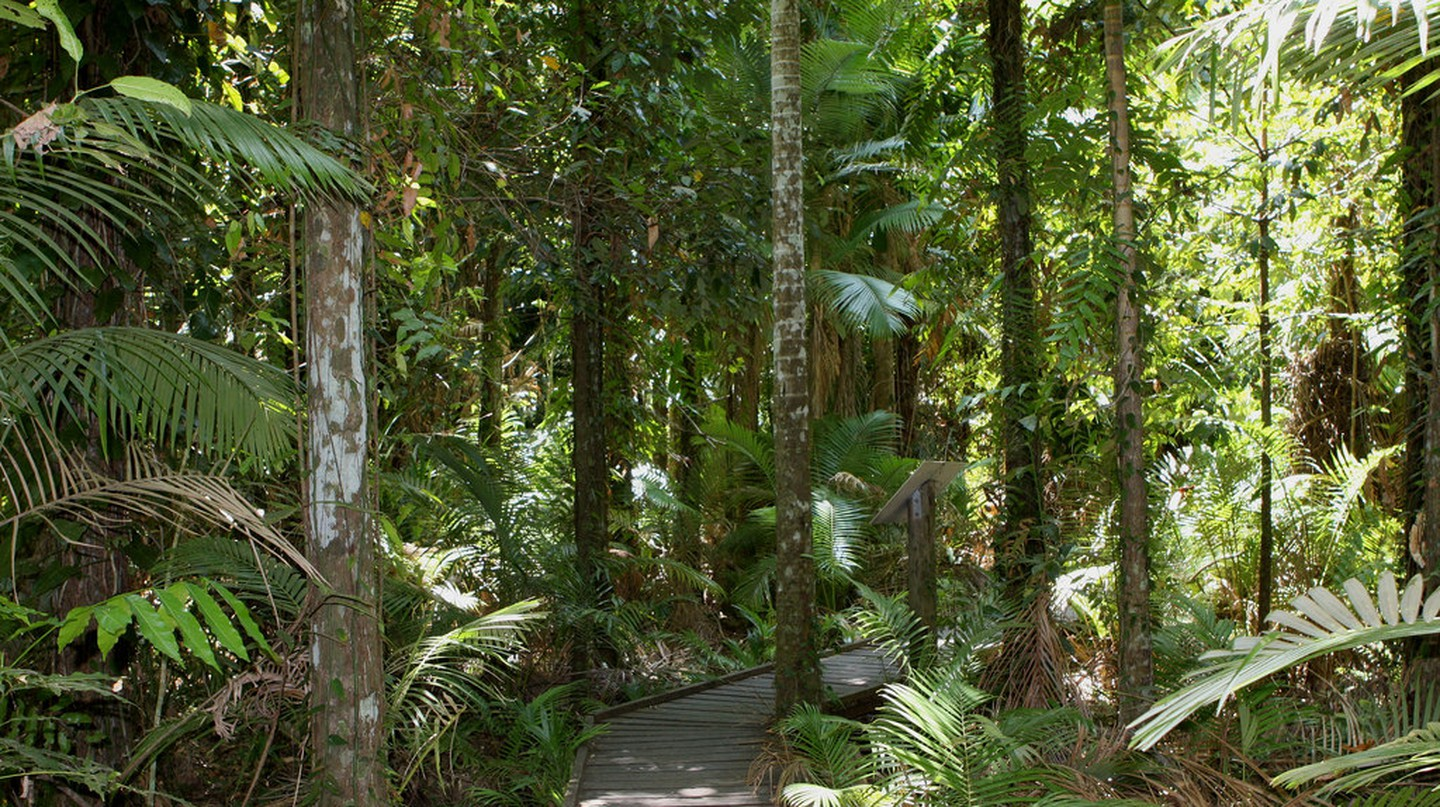 Cairns Boardwalk | © Brewbooks/ Flickr