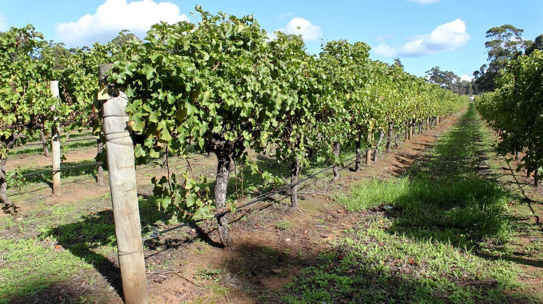 https://pixabay.com/en/australia-vines-vineyard-wine-730142/