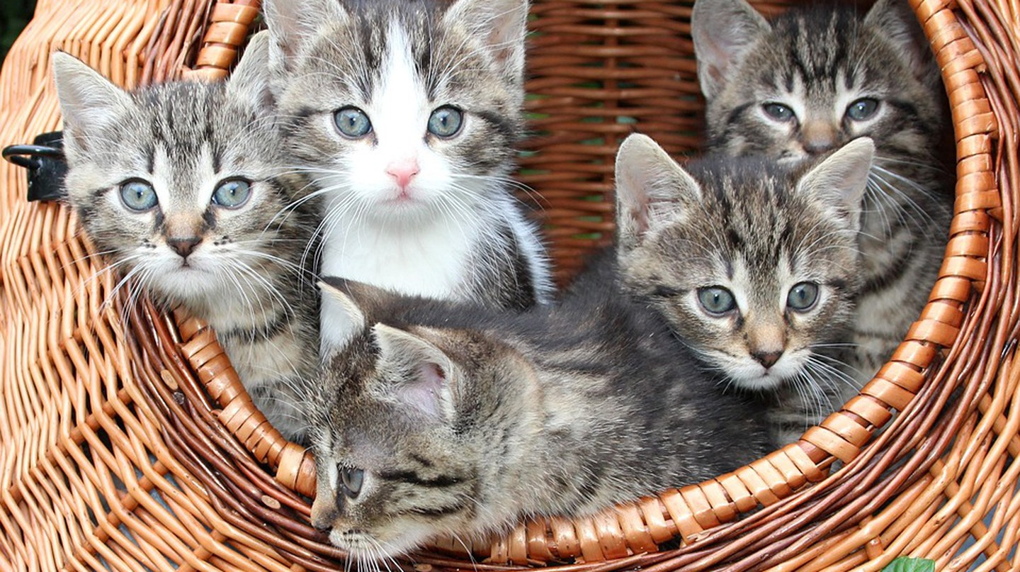 Kittens playing in a basket / © Pixabay
