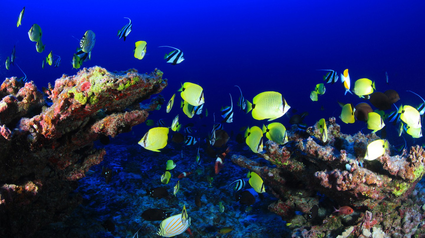 Deep reef wonders © NOAA/Flickr