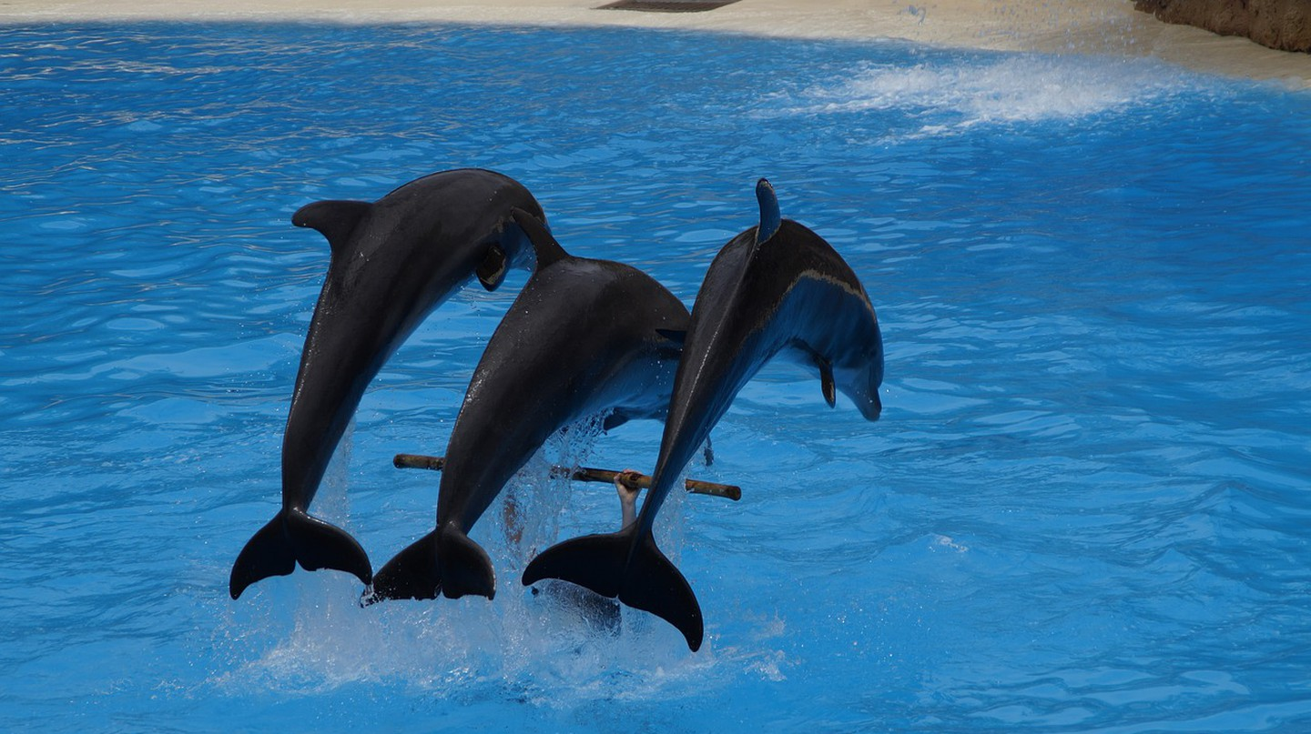 In Portugal, watch a dolphin show. © Pixabay