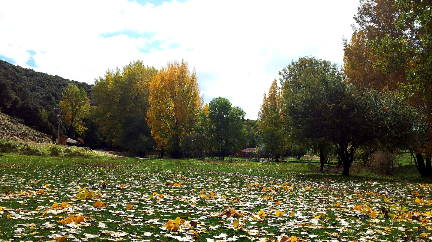 Colourful fallen leaves scattered across the grass in Ifrane | © Soufiane M / Flickr