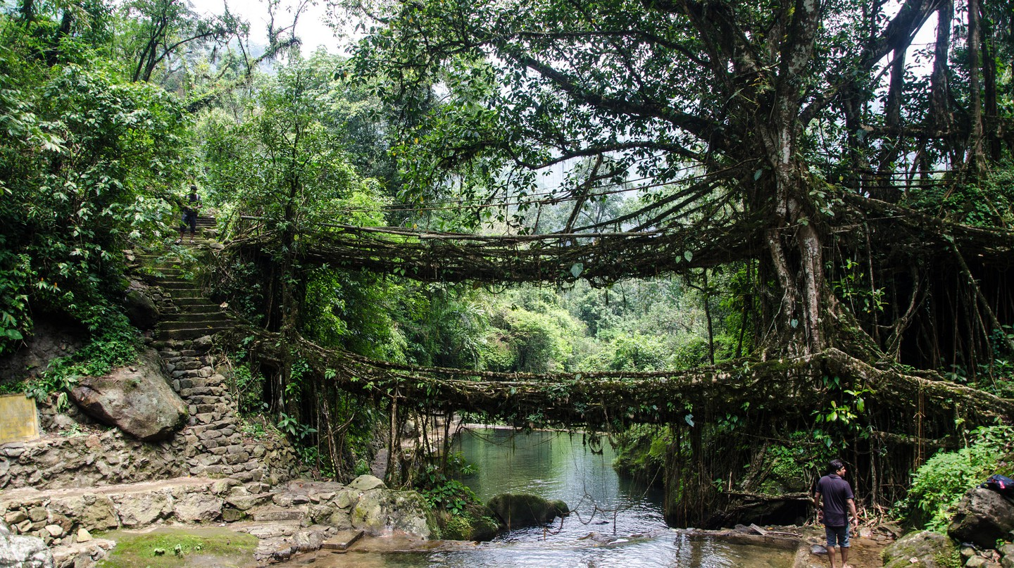 "<a href=""https://www.flickr.com/photos/ashwinkumar/7344205654/"" target=""_blank"" rel=""noopener noreferrer"">Double Decker Living Root Bridge 
