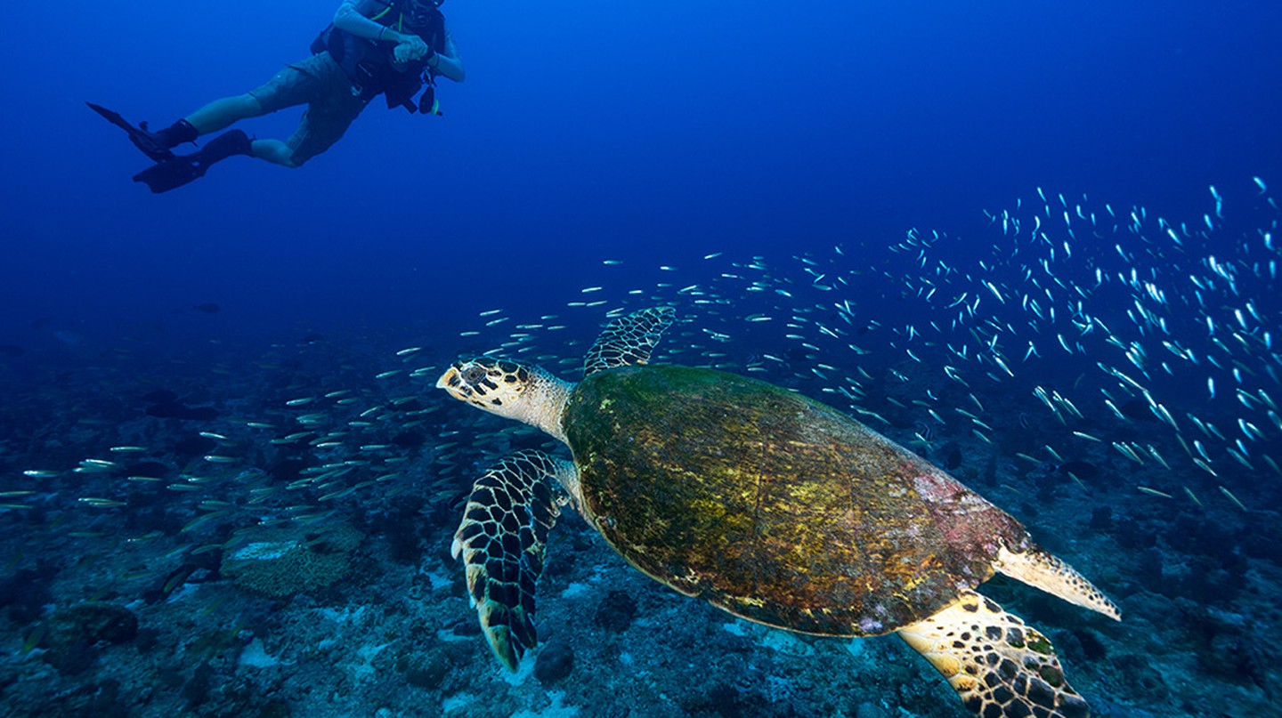 Diving with turtles at North Island | Image courtesy of North Island Resort