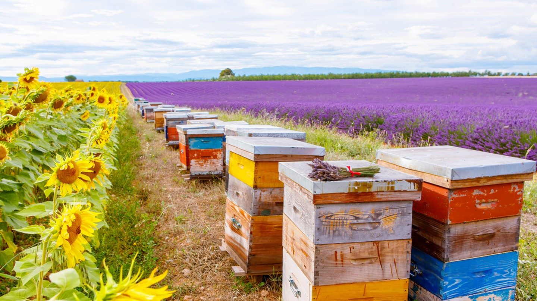 Honey | © Romrodphoto/Shutterstock