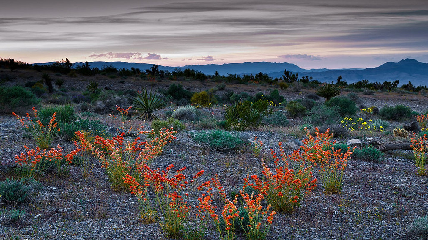 8 Places To Enjoy The Great Outdoors In Nevada
