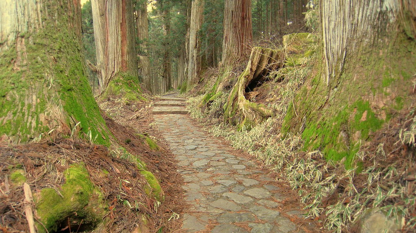 Ancient cedars at Nikko | © Daderot/Wikimedia Commons